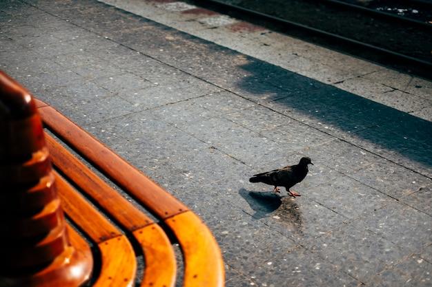 Promenade des oiseaux en public Photo gratuit
