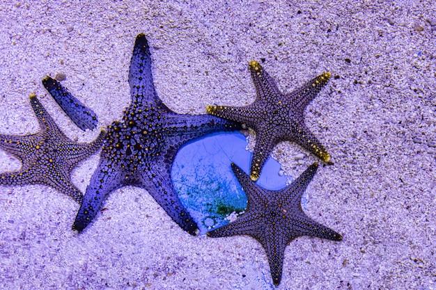 À propos des poissons de mer et des poissons d'eau douce dans l'aquarium Photo Premium