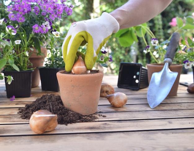 À Proximité Du Jardinage Planter Un Bulbe De Fleur Dans Un Pot Posé Sur Une Table De Jardin Photo Premium
