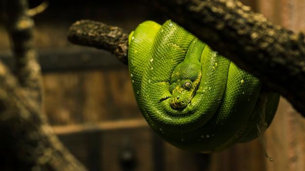 Python Photo gratuit