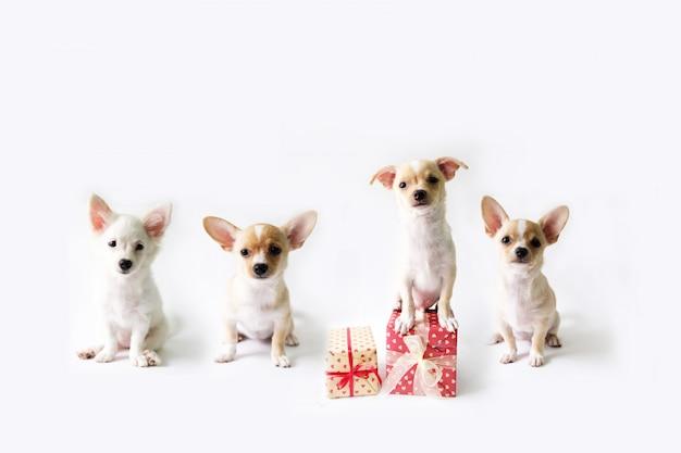 Quatre chiens avec une boîte-cadeau se tenant sur un fond blanc. Photo Premium