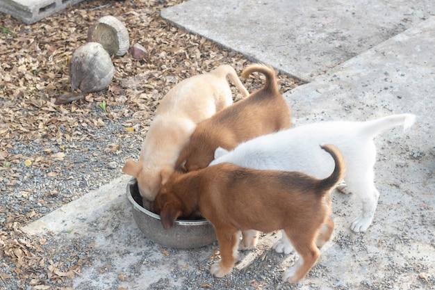 Quatre chiots mangent de la nourriture pour chien dans un bol Photo Premium