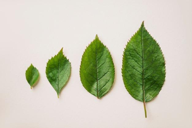Quatre Feuilles Vertes Photo gratuit
