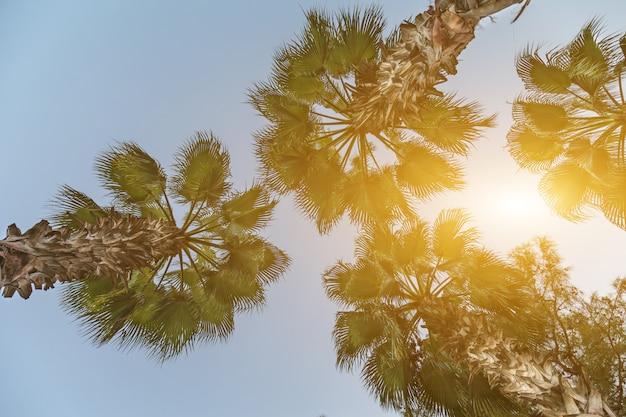 Quelques palmiers contre le ciel bleu Photo Premium
