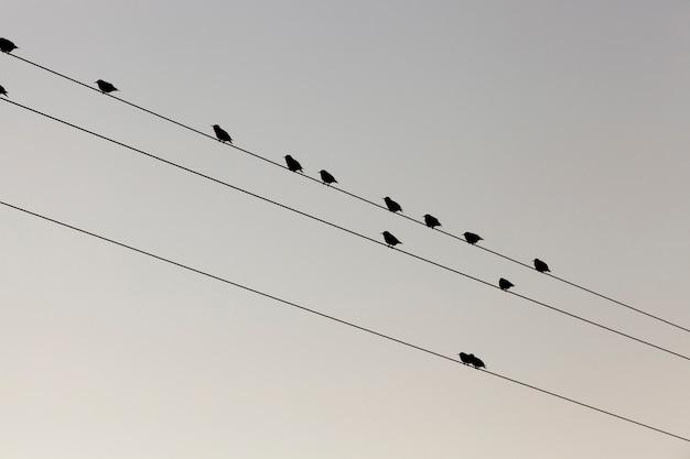 Quelques Petits Oiseaux Se Reposent, Assis Sur Les Lignes De Poteaux électriques à Haute Tension Contre Le Ciel. Photographié En Gros Plan En Bas. Photo Premium