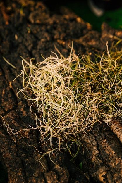 Les racines de la nature à la surface du rocher Photo gratuit