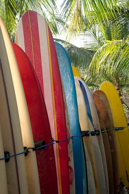 Rack de planches de surf multicolores rayées stockées à la plage dans une forêt de palmiers Photo Premium
