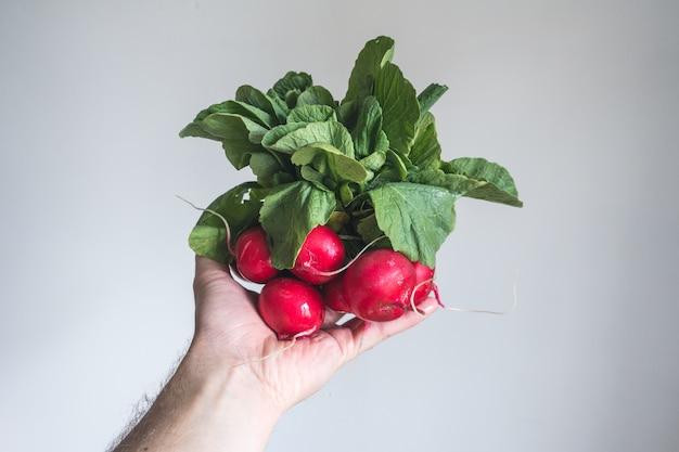 Radis rouge à la main avec fond blanc Photo gratuit