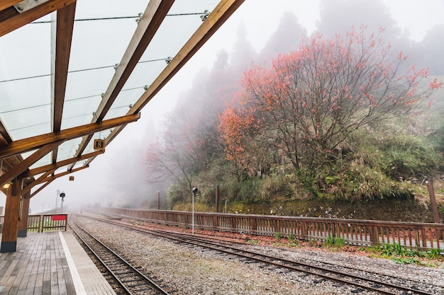 Des Rails De Train Vides Dans Le Chemin De Fer De La Forêt D'alishan S'arrêtent Avec Des Arbres Et Du Brouillard. Photo Premium