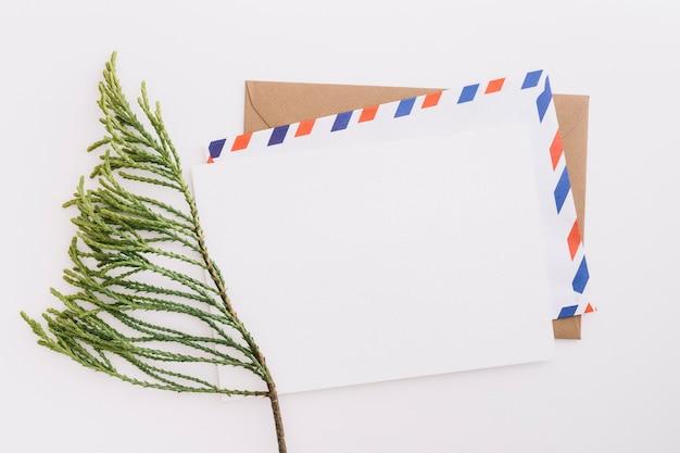Rameau De Cèdre Avec Enveloppe De Courrier Sur Fond Blanc Photo gratuit