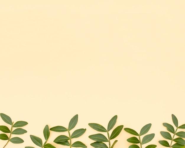 Rameau de feuilles fraîches disposé en rang sur la surface jaune Photo gratuit