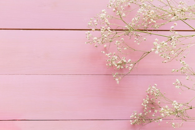 Rameaux de plante avec des fleurs Photo gratuit