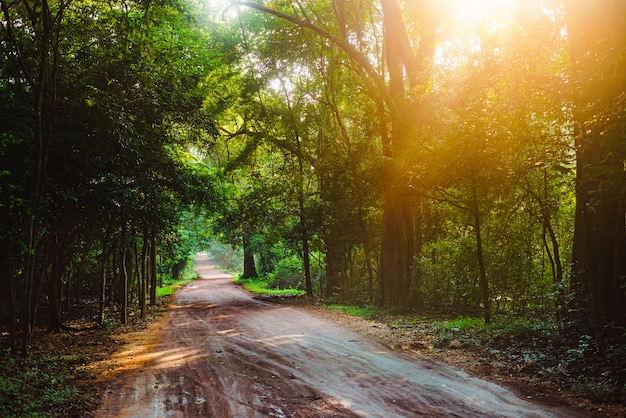 Randonneur marchant dans la jungle route forêt soleil asie sri lanka Photo Premium