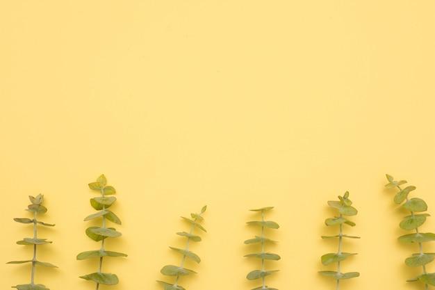 Rangée d'eucalyptus laisse un rameau sur une surface jaune Photo gratuit