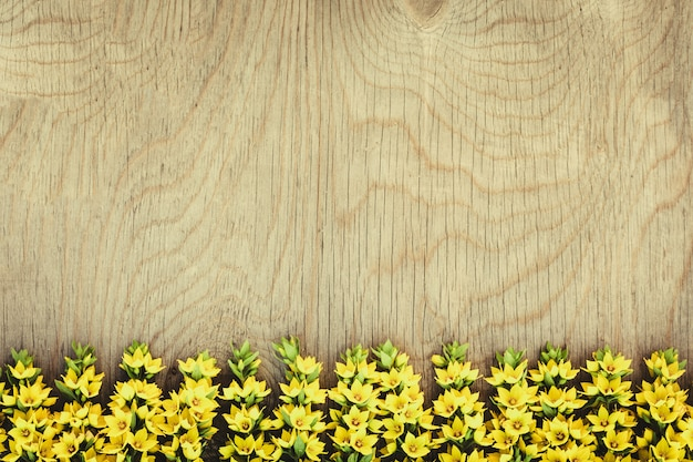 Rangée de fleurs jaunes sur bois Photo Premium