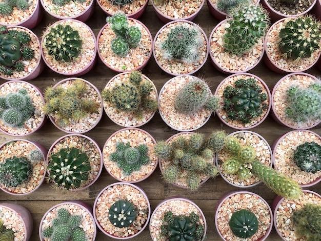 Rangée de plantes de cactus dans le magasin de fleurs Photo Premium
