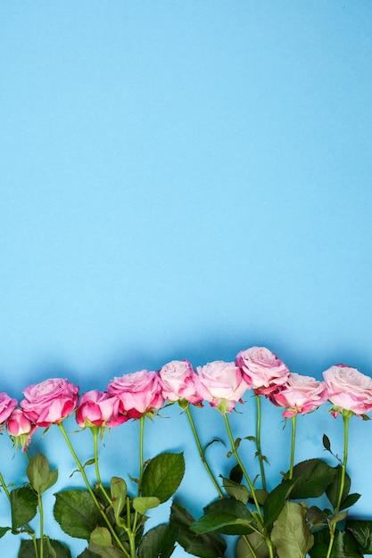 Rangée De Roses Roses Et De Feuilles Vertes Disposées Sur Un Fond Bleu Photo gratuit