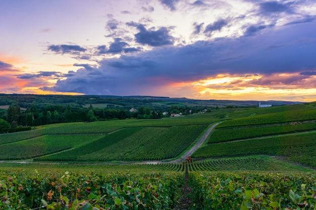 Rangée De Vigne Dans Les Vignes De Champagne à La Montagne De Reims Campagne Village Fond Photo Premium