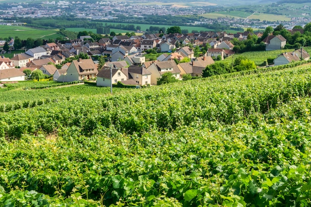 Rangée De Vigne Dans Les Vignobles De Champagne à La Campagne De Montagne De Reims Village Photo Premium