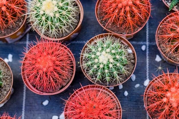 Rangées de différentes plantes succulentes dans le magasin de jardin Photo Premium