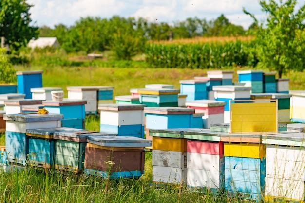 Des rangées de ruches colorées se tiennent dans le jardin en été Photo Premium
