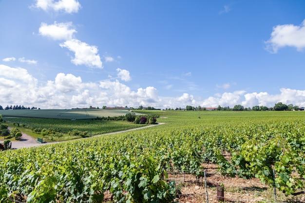 Rangées De Vignes Sur Une Journée Ensoleillée Photo Premium