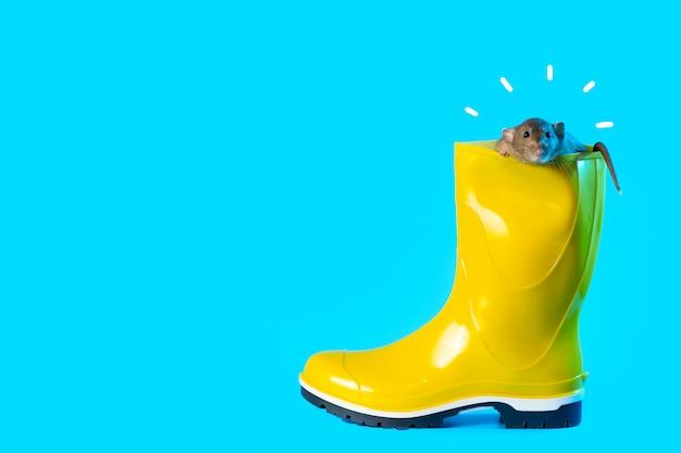 Rat décoratif dans une botte en caoutchouc jaune vif sur fond bleu. symbolise l'automne et l'année du rat Photo Premium