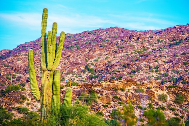 Raw arizona landscape Photo gratuit