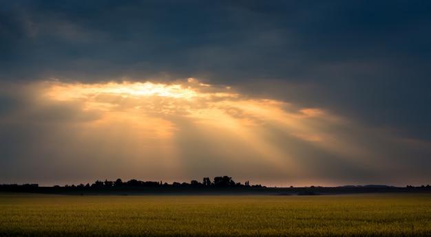 Les Rayons Du Soleil Au-dessus Du Champ De Blé Le Matin Pendant Le Lever Du Soleil. Nuages Sombres Sur Le Terrain Au Coucher Du Soleil Photo Premium