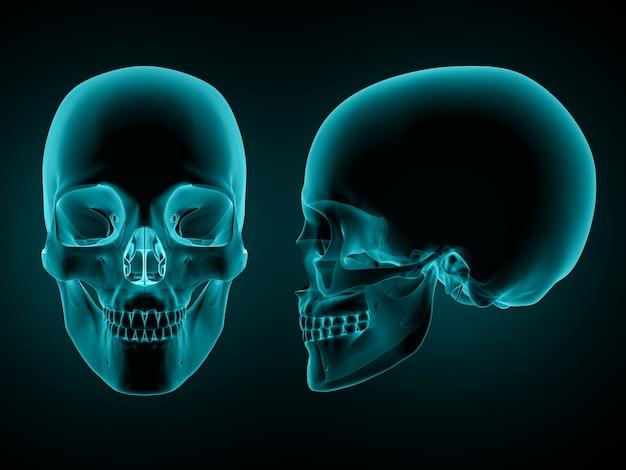 Réalisation en 3d d'un front et d'une vue latérale d'un crâne Photo gratuit