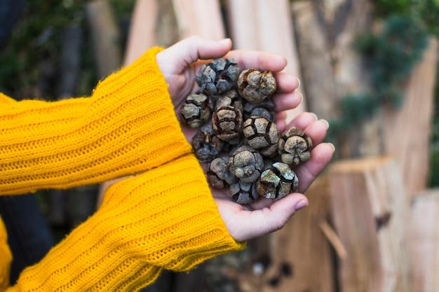 Recadrer les mains avec des cônes dans la nature Photo gratuit
