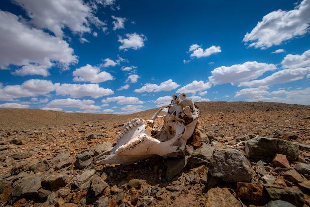 Le Réchauffement Climatique Fait Un Paysage Aride Sur La Terre Photo Premium