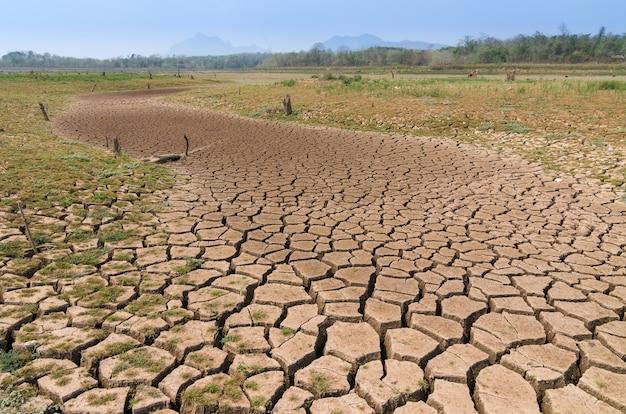 Réchauffement climatique, sécheresse. Photo Premium