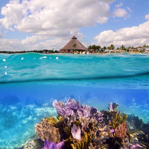 Récif corallien sur la riviera maya à cancun au mexique Photo Premium