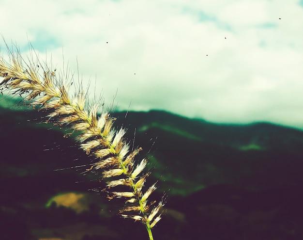 Une récolte sur une montagne Photo gratuit