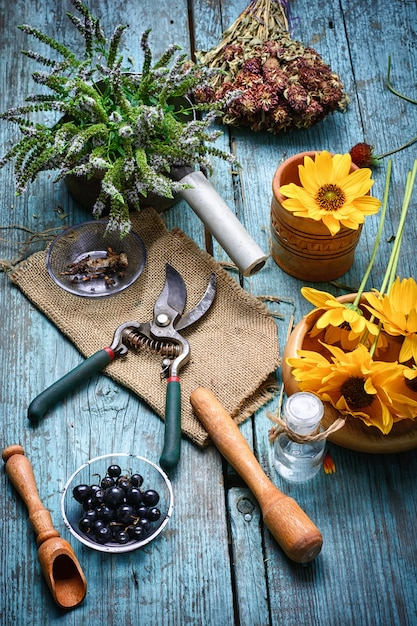 Récolte De Plantes Médicinales Photo Premium