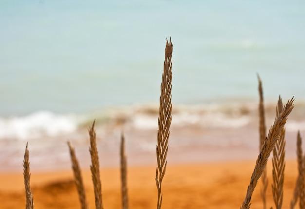 Regarde la mer Photo Premium