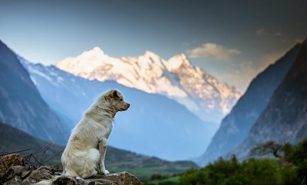 Regarder la montagne par un chien, vallée de tusm, népal, Photo Premium