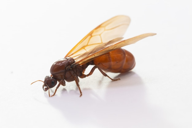 Reines des fourmis souterraines Photo Premium
