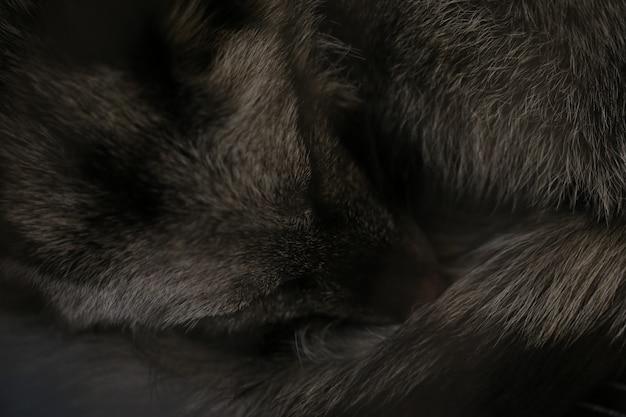 Renard noir endormi Photo Premium