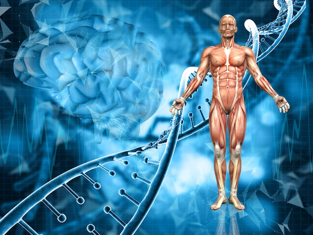 Rendu 3d d'un fond médical avec la figure masculine, les brins d'adn et le cerveau Photo Premium