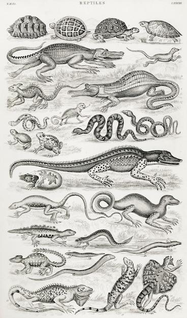 Reptiles from une histoire de la terre Photo gratuit
