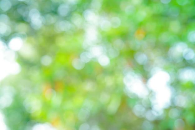 Résumé flou fond de parc nature bokeh feuilles fraîches arbre. Photo Premium