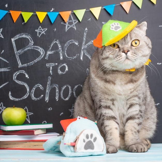 De retour à l'école, un chat dans une casquette et avec un sac à dos sur le fond du tableau et des accessoires scolaires Photo Premium