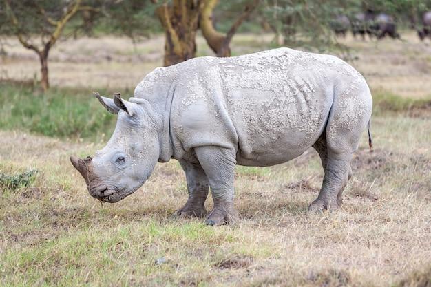Rhino Dans Les Plaines Photo gratuit