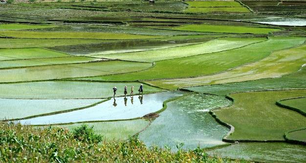 Riz de montagne au vietnam Photo Premium