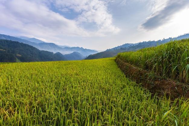 Rizière En Terrasse Paysage De Mu Cang Chai Photo Premium