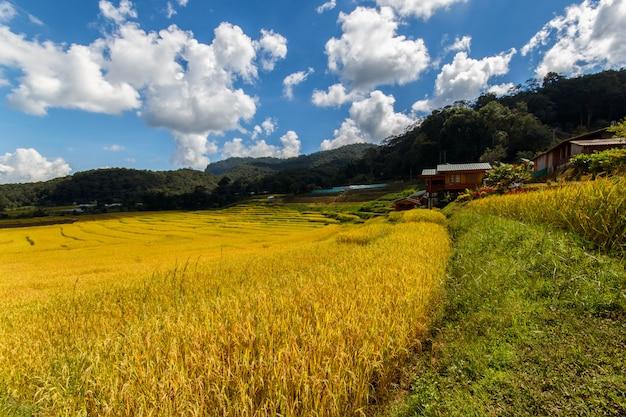 Rizière En Terrasses Verte à Mae Klang Luang, Mae Chaem, Chiang Mai, Thaïlande Photo Premium