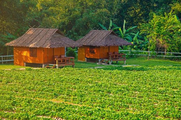 Rizière en terrasses verte à mae klang luang Photo Premium