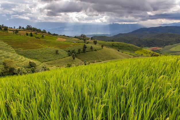 Rizière verte en terrasse à pa pong pieng, mae chaem, chiang mai, thaïlande Photo Premium